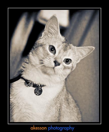 cat-chai_0024_btone.jpg