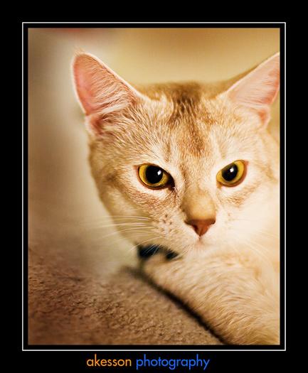 cat-chai_0025.jpg