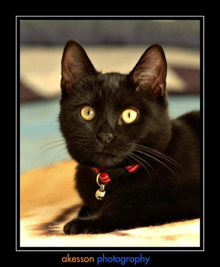 cat-leylah001.jpg